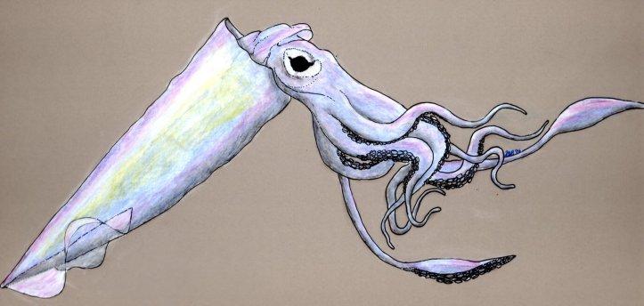 cp_squid_web-full