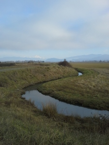 One of the waterways in the Skagit flats, with Mt. Baker in the background.